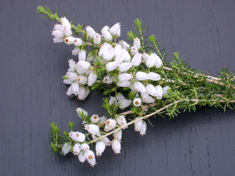 Thumbnail photograph of Duncan Fraser