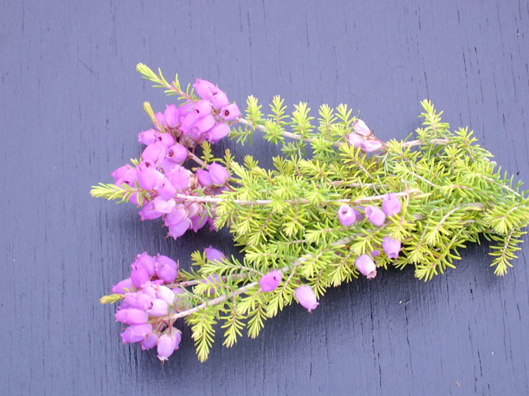 Thumbnail photograph of Fiddler's Gold