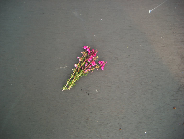 Thumbnail photograph of P. S. Patrick