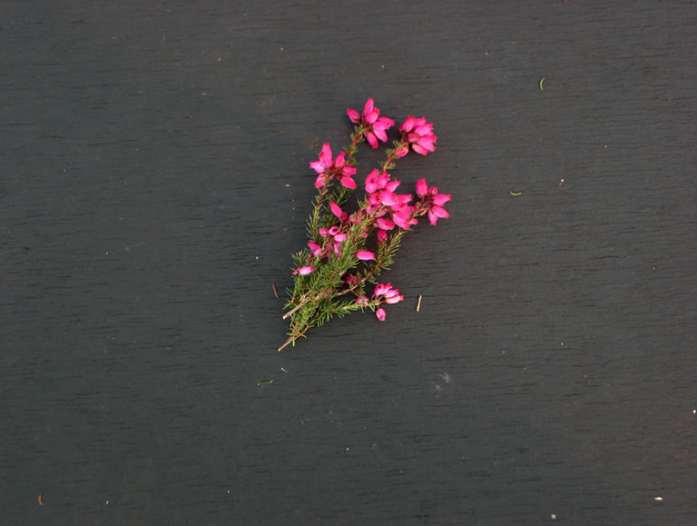 Thumbnail photograph of Stephen Davis